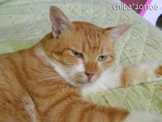 chiba11-6-156.jpg