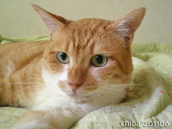 chiba11-6-176.jpg