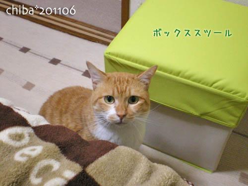 chiba11-6-20.jpg