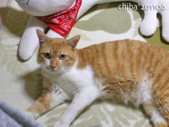 chiba11-6-210.jpg