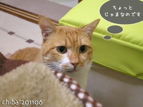 chiba11-6-22x.jpg