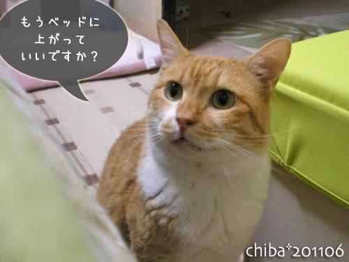 chiba11-6-26.jpg