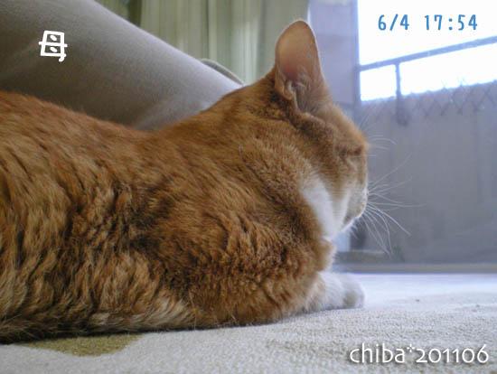 chiba11-6-27x.jpg