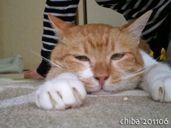chiba11-6-32.jpg