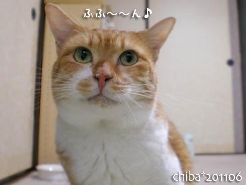 chiba11-6-8.jpg