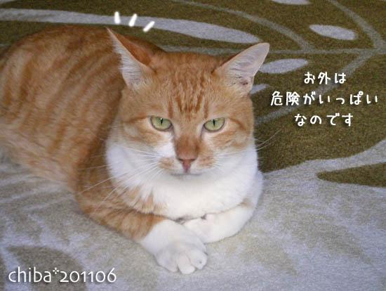 chiba11-6-88x.jpg
