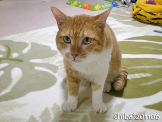 chiba11-6-93.jpg