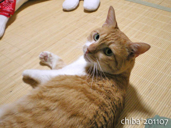 chiba11-7-11.jpg
