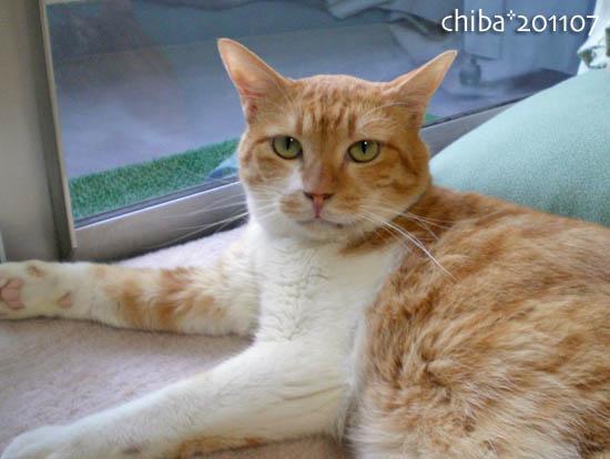chiba11-7-123.jpg