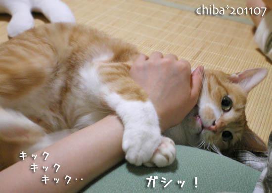 chiba11-7-150.jpg