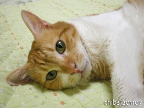 chiba11-7-181.jpg