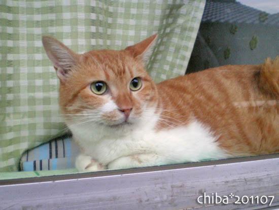 chiba11-7-53.jpg