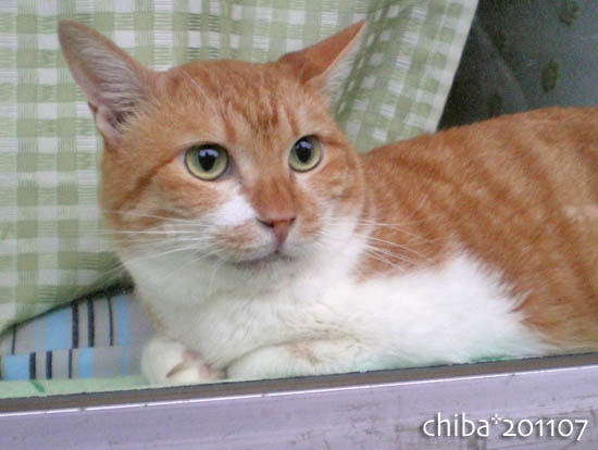 chiba11-7-54.jpg
