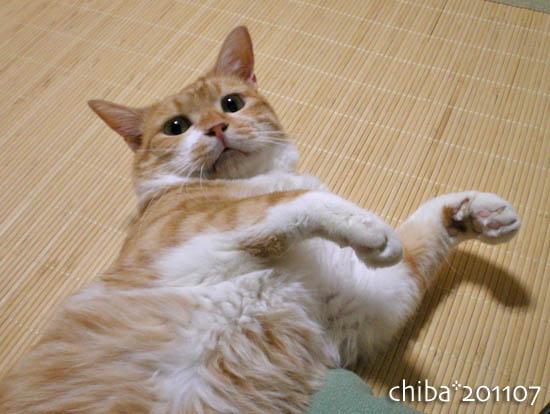 chiba11-7-8.jpg