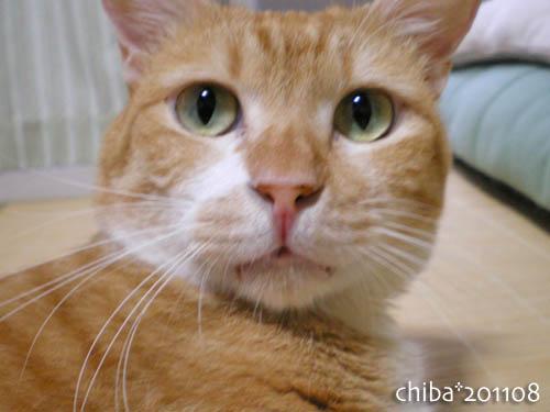 chiba11-8-09.jpg
