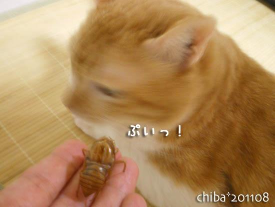 chiba11-8-115.jpg
