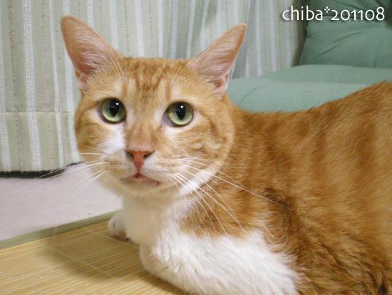 chiba11-8-116.jpg