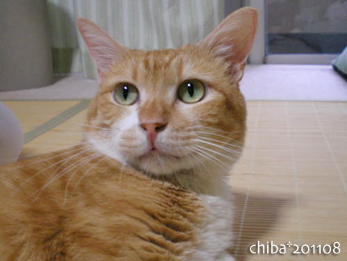 chiba11-8-12.jpg