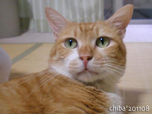 chiba11-8-13.jpg