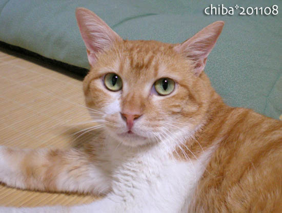 chiba11-8-18.jpg