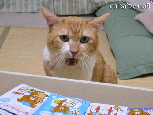 chiba11-8-55.jpg