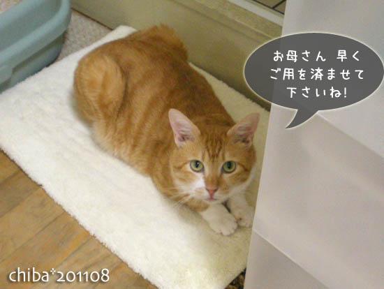 chiba11-8-73.jpg