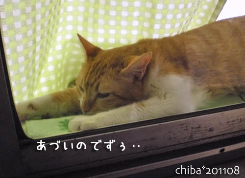 chiba11-8-79.jpg