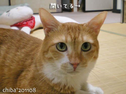 chiba11-8-80.jpg