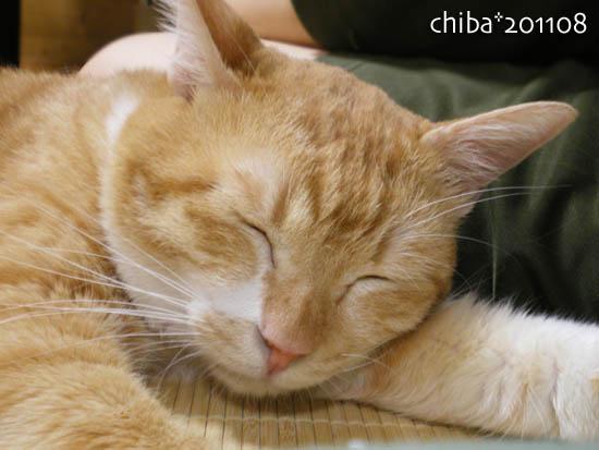 chiba11-8-87.jpg