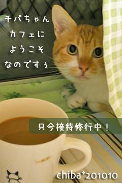 chiba_cafe.jpg