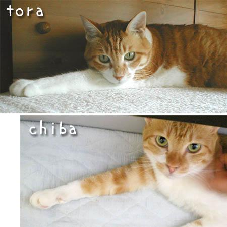 tora-chiba-1.jpg