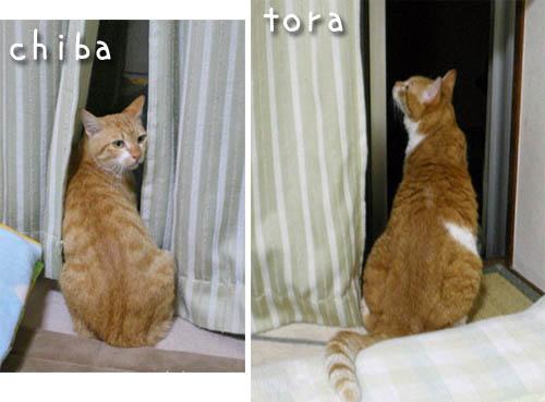 tora-chiba-2.jpg