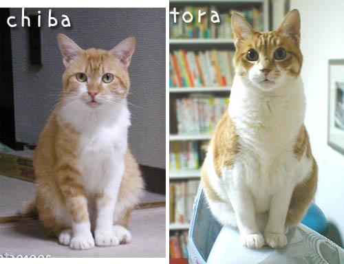 tora-chiba-3.jpg