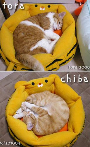 tora-chiba4.jpg