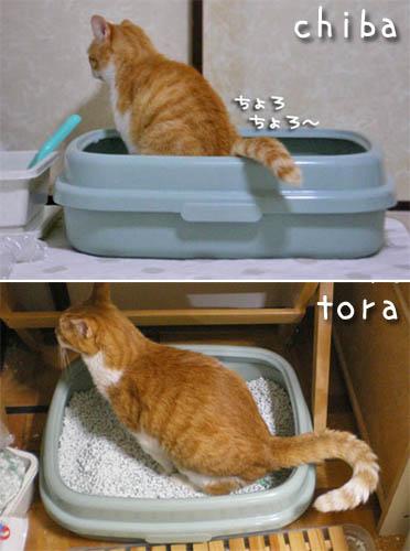 tora-chiba9-3.jpg