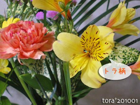 tora10-01-103.jpg