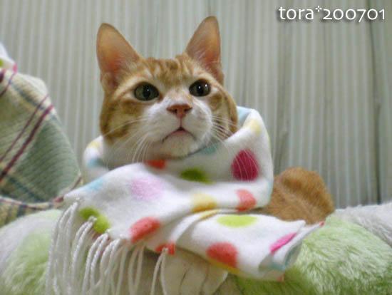 tora10-01-127.jpg