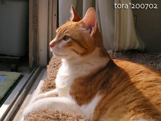 tora10-02-74.jpg