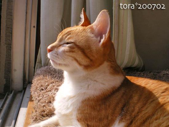 tora10-02-75.jpg