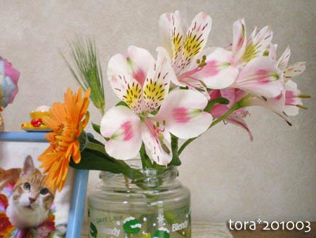 tora10-03-01.jpg