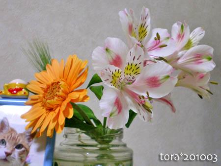 tora10-03-04.jpg