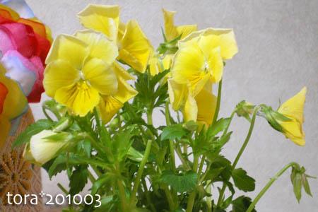 tora10-03-94.jpg