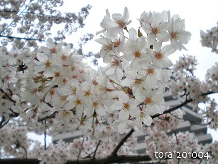 tora10-04-34.jpg