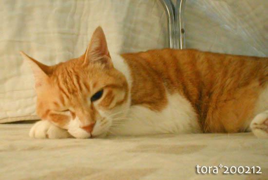 tora10-04-52.jpg