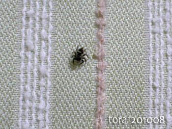 tora10-08-17s.jpg
