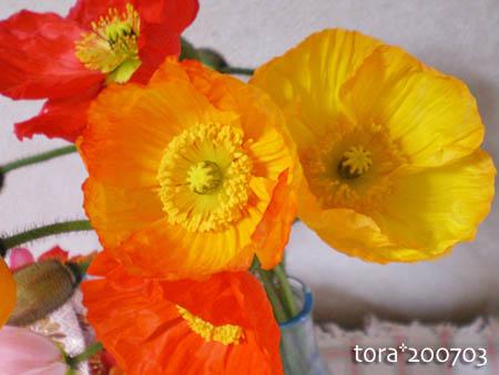tora11-3-13.jpg
