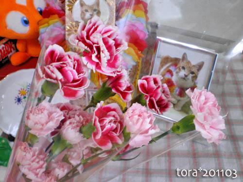 tora11-3-15.jpg