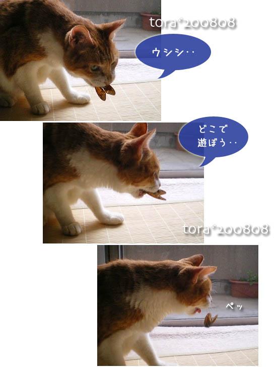 tora11-8-31.jpg