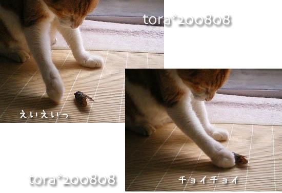 tora11-8-32.jpg