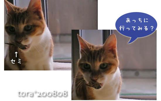 tora11-8-33.jpg